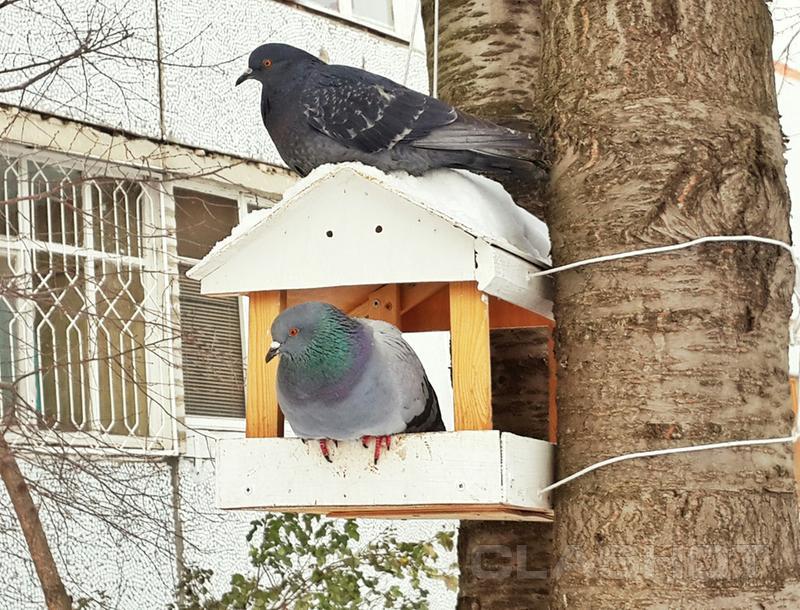 парфюмерия прилетел голубь застрчл в онжкне и умер Armani Acqua